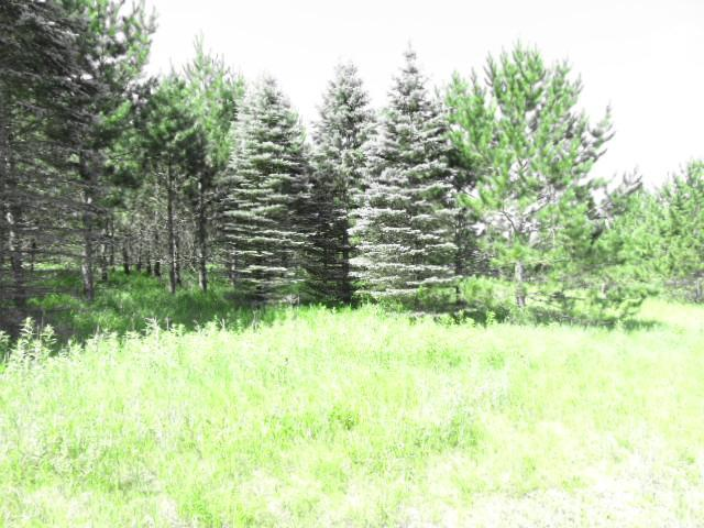 TBD Bear Den Dr Sw, Pine River Twp, MN 56435 (#5265336) :: The Michael Kaslow Team