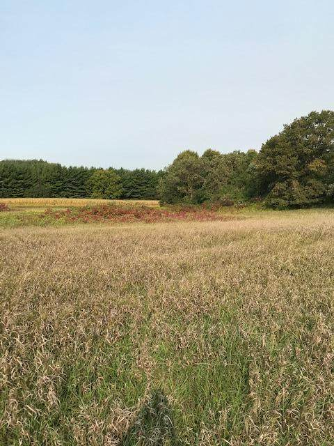 xxxx Island Estates (Site4) Drive NW, Pine Island, MN 55963 (#5668316) :: The Preferred Home Team