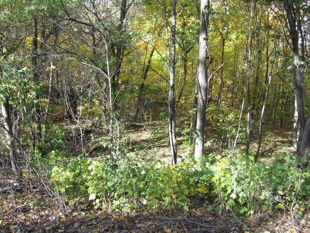 XXX Crooked Lake SW, Farwell, MN 56327 (#5683600) :: The Preferred Home Team