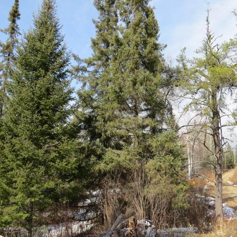 XXX Twin Lakes Road - Photo 1