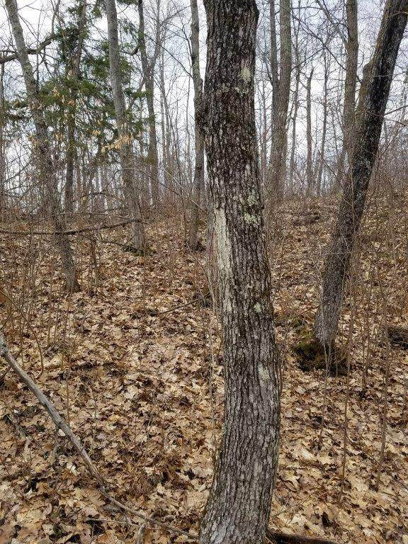 TBD Moose Trail, Laporte, MN 56461 (#5738995) :: Lakes Country Realty LLC