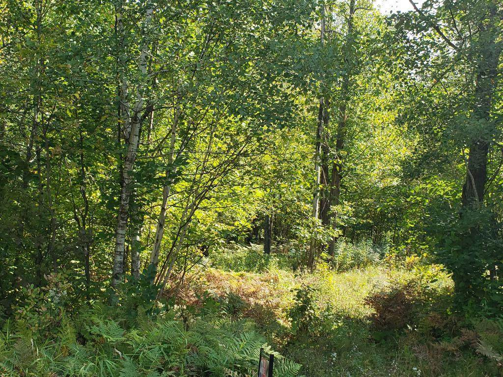 41286 Yellow Birch Lane - Photo 1