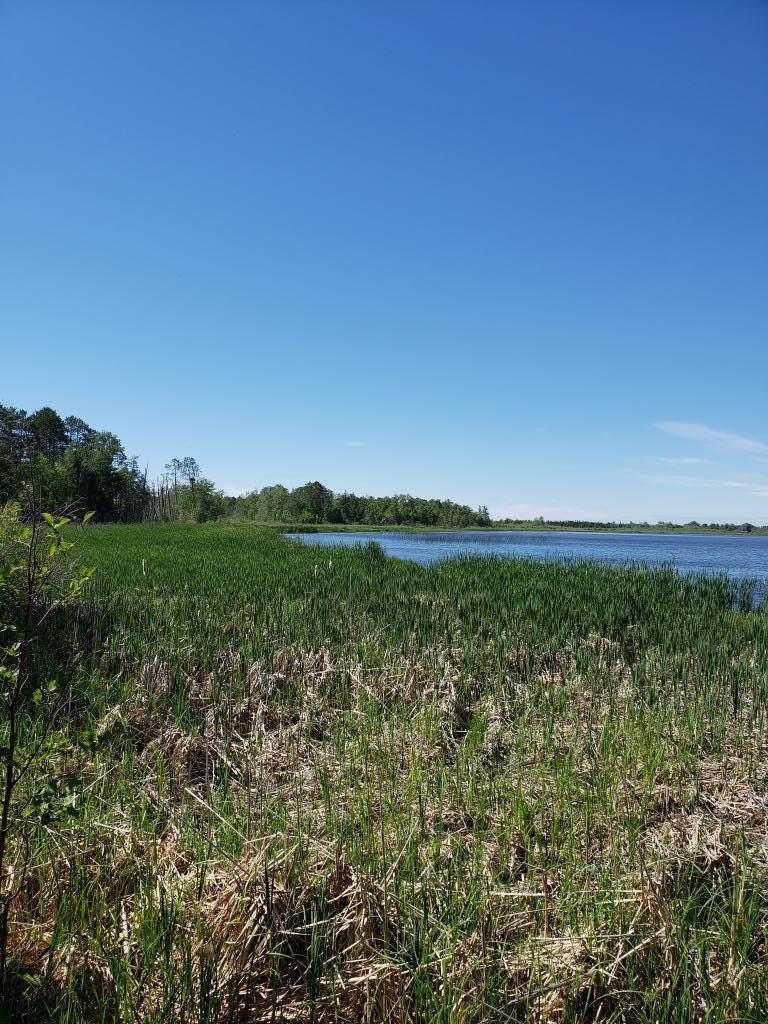 TBD Little Cowhorn Lake - Photo 1