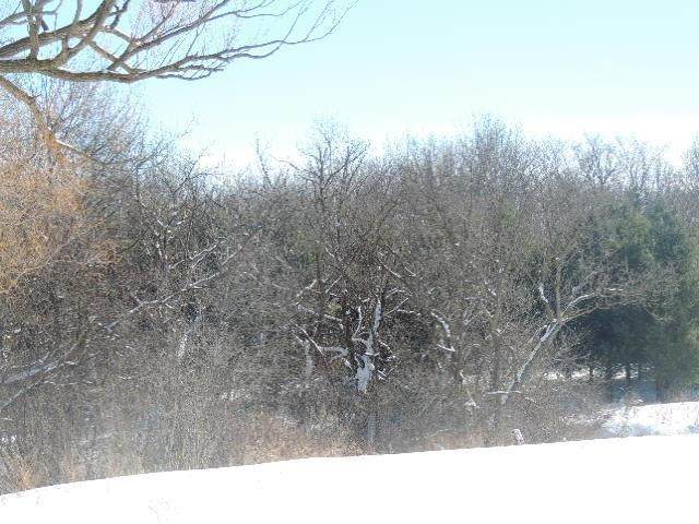 1112 Timber Path Road, Menomonie, WI 54751 (#5712452) :: Bos Realty Group