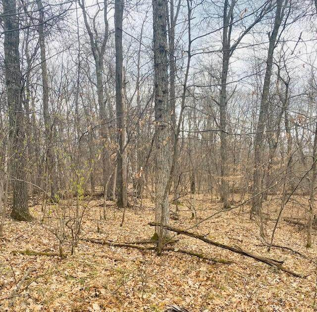 TBD Squirrel Drive, Breezy Point, MN 56472 (MLS #5743569) :: RE/MAX Signature Properties