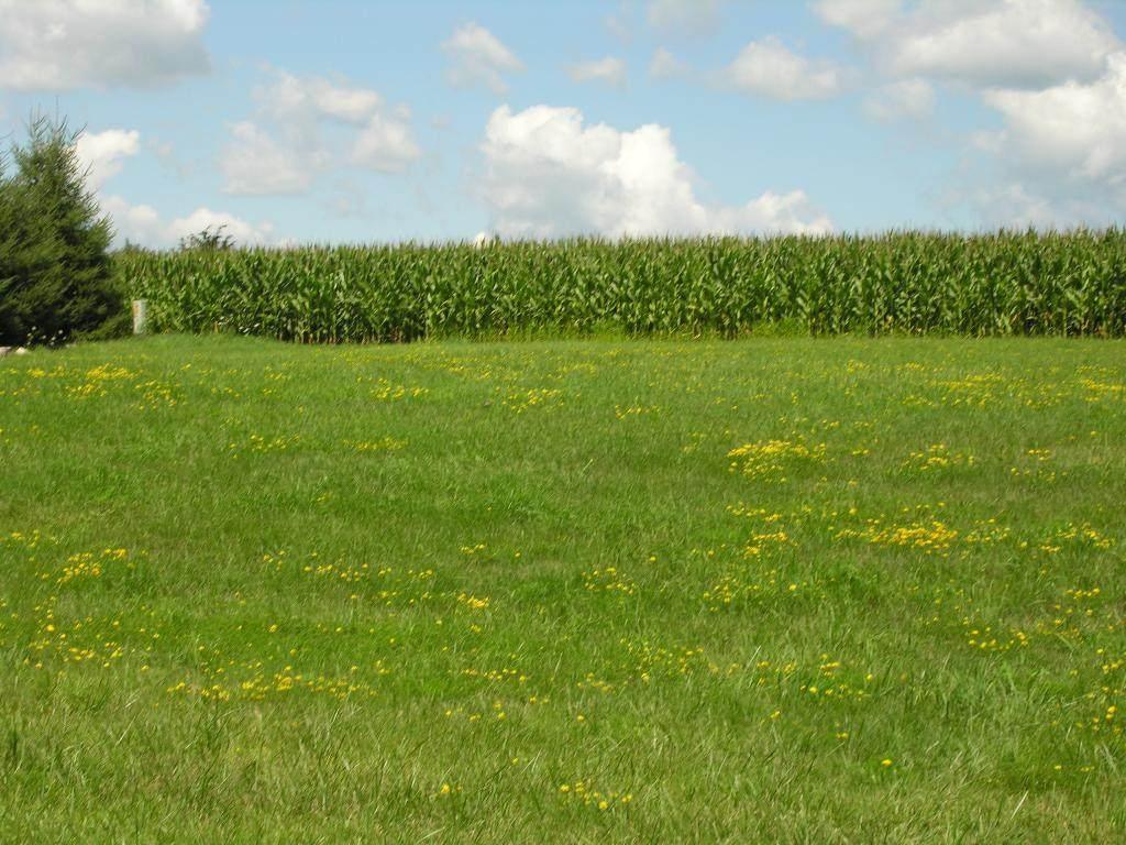 XX Prairie View-Lot 2 Drive - Photo 1
