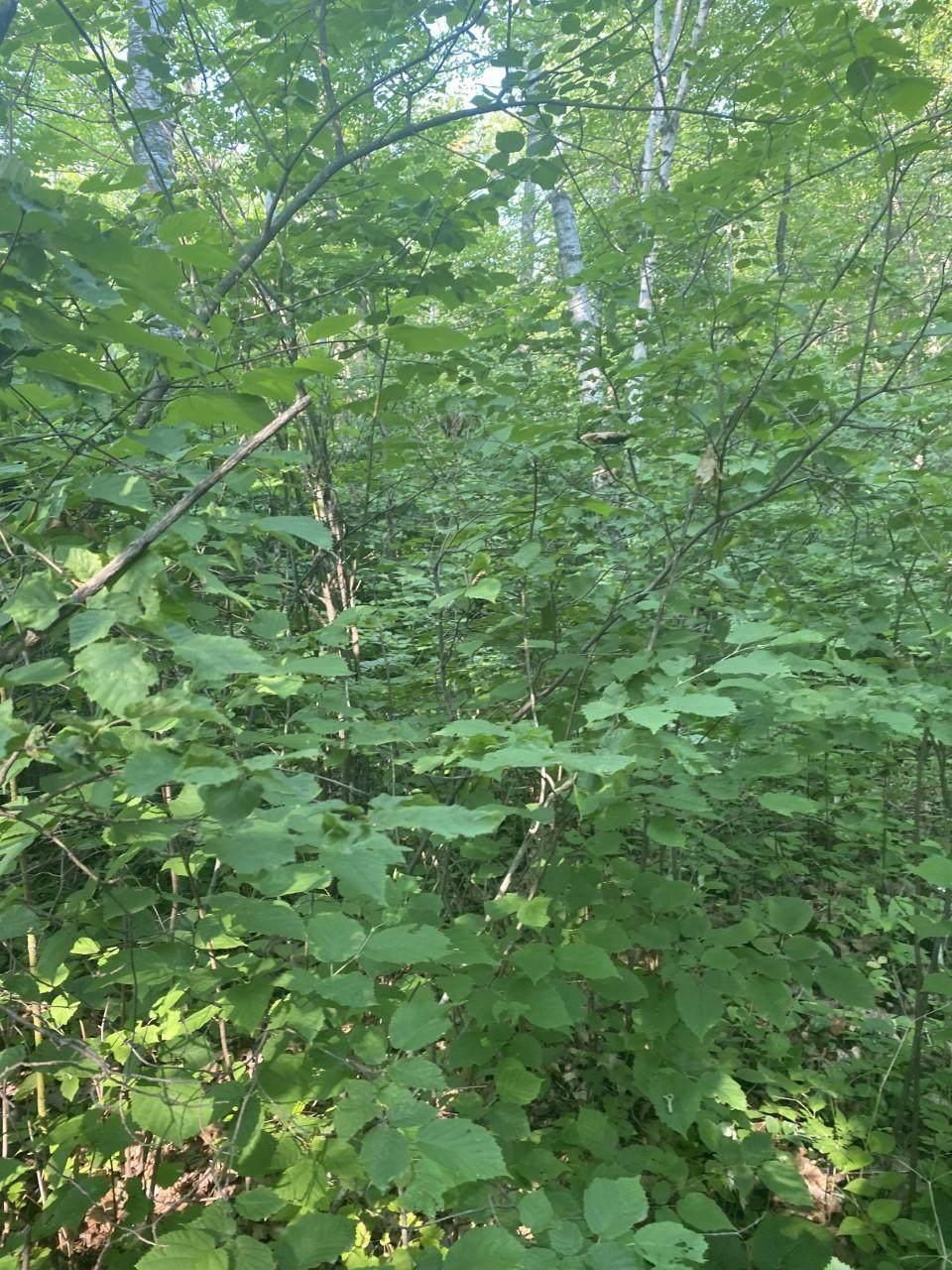 TBD Woodchuck Trail - Photo 1