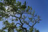 5999 Foxen Canyon Road - Photo 30