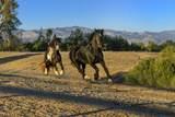 1599 Refugio Road - Photo 30