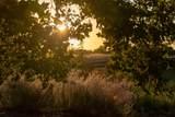 705 Mesa Drive - Photo 14