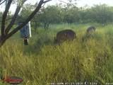 505 Acres Cr 161 - Photo 32
