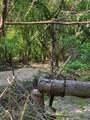 TBD 71 Beene Creek Trail - Photo 24