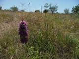 Tract 6 Private Road 3642 - Photo 5