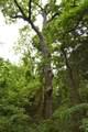 103 Birch - Photo 29