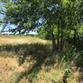 7388 Farm Road 114 - Photo 8