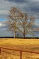 39324 Misty Ridge Drive - Photo 30