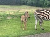 LT 223 Safari Shores Drive - Photo 9