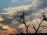 1133 Sparrow Court - Photo 17