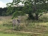 LT 218 Safari Shores - Photo 13