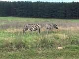 LT 218 Safari Shores - Photo 15