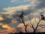 1100 Raven Circle - Photo 16