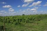 TBD Good Vibe Vineyards - Photo 19