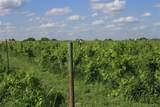 TBD Good Vibe Vineyards - Photo 21