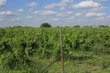 TBD Good Vibe Vineyards - Photo 22