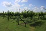 TBD Good Vibe Vineyards - Photo 23