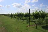 TBD Good Vibe Vineyards - Photo 24