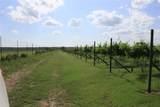 TBD Good Vibe Vineyards - Photo 25