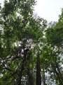 TBD Dogwood Trail - Photo 1