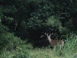 39142 Shadow Ridge Drive - Photo 1
