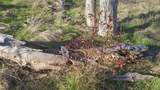 Lot 4 Los Establos Trail - Photo 7