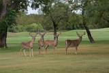 18117 Woodside Drive - Photo 7