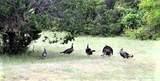 1182 Leaning Oak Trail - Photo 24