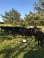 4260 County Road 1040 - Photo 6