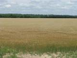 TBD County Rd 160 - Photo 13