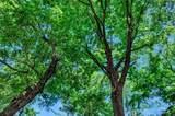 TBD 3.594 Acres - Photo 3