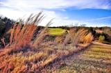 _ Bay Creek Lane - Photo 7