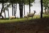 Lot378D Timber Ridge - Photo 10