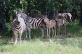 9132 Zebra Crossing - Photo 26