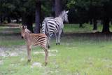 9132 Zebra Crossing - Photo 27