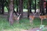 9132 Zebra Crossing - Photo 30