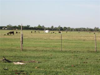 6437 Cr 352, Hawley, TX 79525 (MLS #13575812) :: The Harbin Properties Team