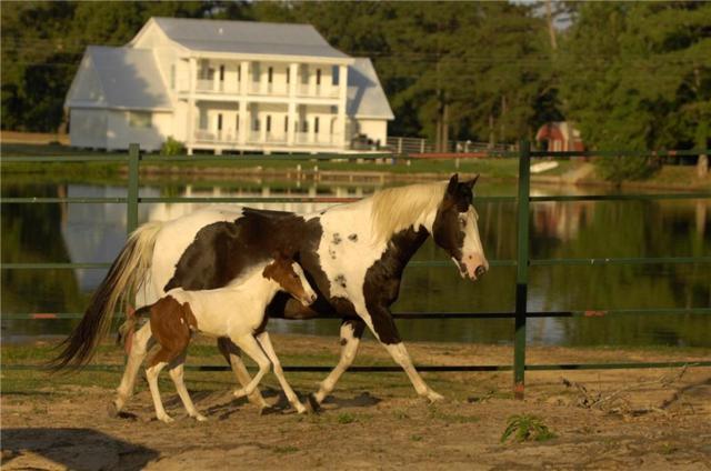 12851 County Road 370, Winona, TX 75792 (MLS #13971307) :: Steve Grant Real Estate
