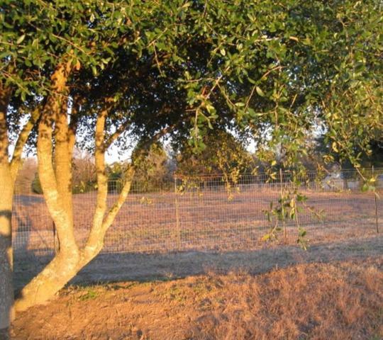 00000 Fm 859, Wills Point, TX 75169 (MLS #13988162) :: The Hornburg Real Estate Group