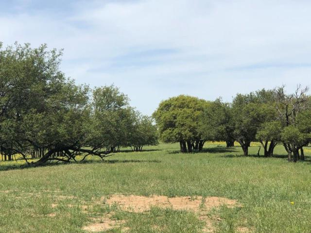 TBD 1 Highway 36, Rising Star, TX 76471 (MLS #14107068) :: RE/MAX Town & Country