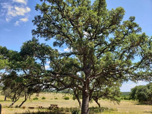 TBD Springbok Trail, Lampasas, TX 76550 (MLS #14148390) :: The Kimberly Davis Group
