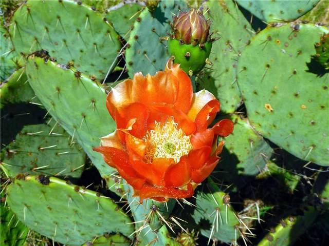 Lt 195 Scarlet Sage, Possum Kingdom Lake, TX 76449 (MLS #14170897) :: NewHomePrograms.com LLC